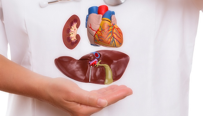 Organ Bağışı Hakkında Merak Edilenler